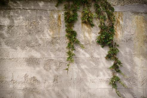 JUNIPER WALL - PARRSBORO, NS