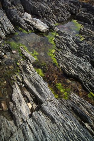 TIDAL POOL 1 - BLUE ROCKS, NS