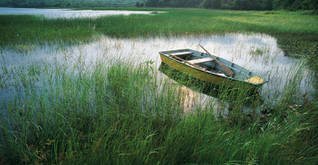 YELLOW DORY - GRAND LAKE, N.S.