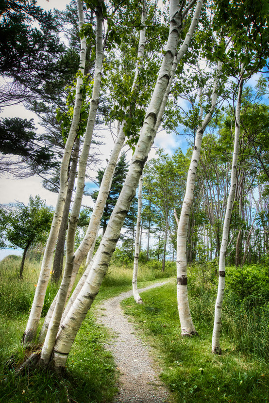 BIRCHES AT WALTON