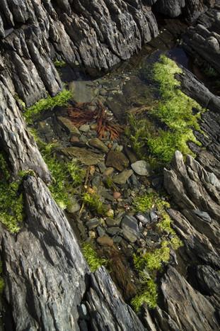 TIDAL POOL 2 - BLUE ROCKS, NS