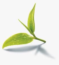 68-688741_images-of-black-tea-leaves-png
