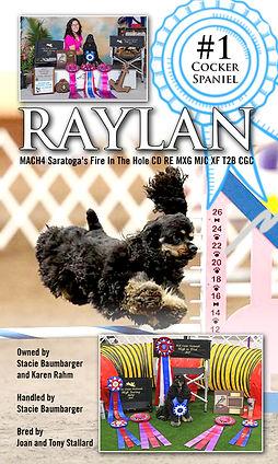 Raylan - #1 Cocker (print ad) 2 Color.jp