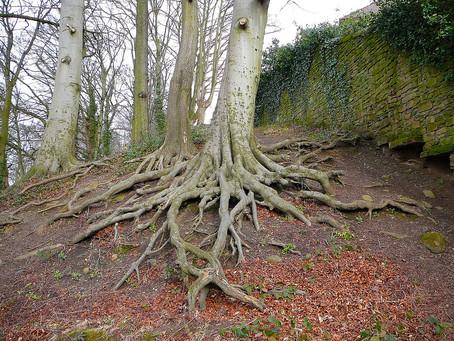 Aeration & Deep Root Feeding