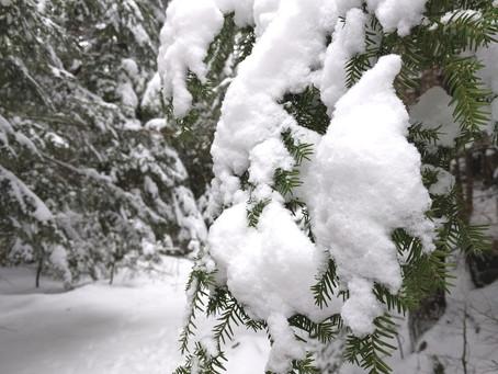 Snowy Storm Damage