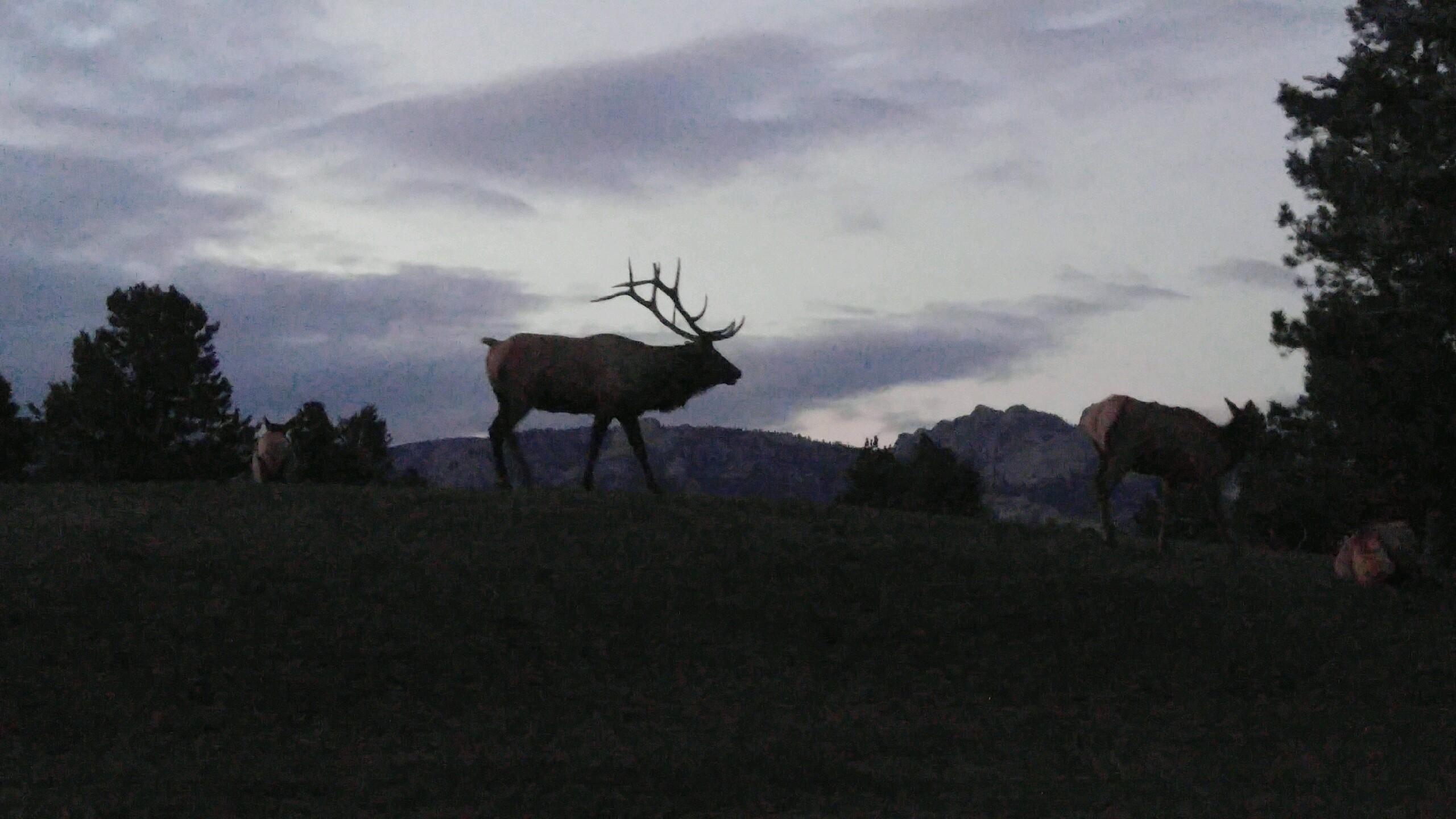 Rocky Mountain .jpg