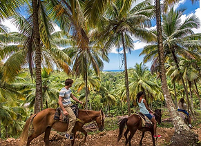top 10 best things to do in LAS TERRENAS