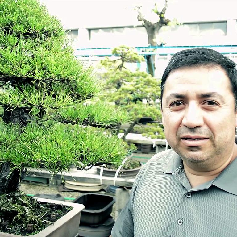 Juan Cruz on developing your tree's character