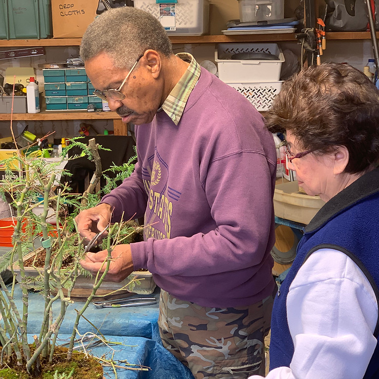 Timm Johnson explains the whens, wheres, hows of pruning bonsai