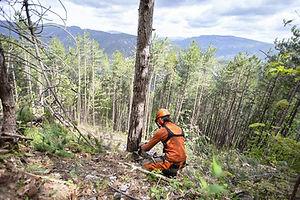 Abattage d'un arbre au Ventoux