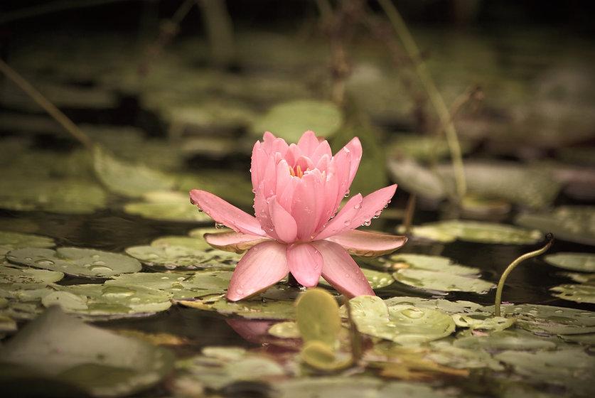 aquatic-plants-3244855_edited.jpg