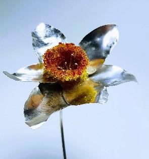 Rebecca Oldfield 4D Daffodil Close Up