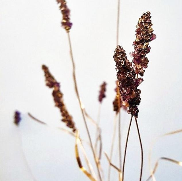 Rebecca Oldfield Lavender Plant