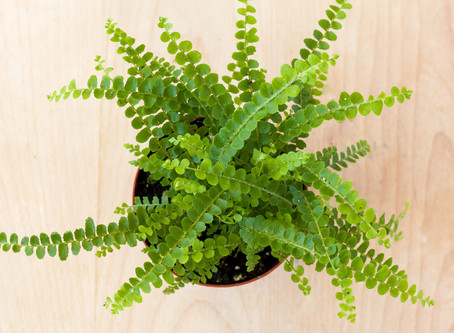Learning to Grow Ferns Indoors