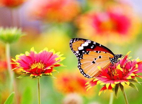 Native Plants that Attract Pollinators