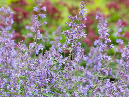 Perennials Part 2: Landscaping Basics for Perennial Beds