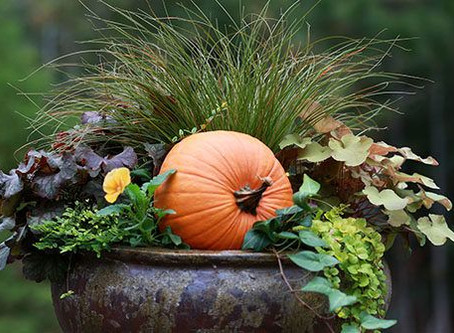 Tips for WelcomingContainer Pots this Thanksgiving