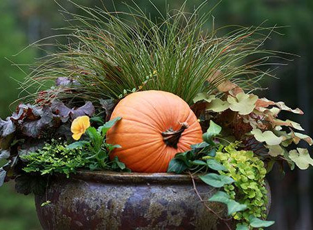 Tips for Welcoming Container Pots this Thanksgiving
