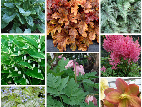 18 Perfect Perennials for Growing in Zones 6b/7a