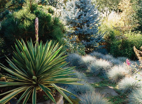 Tips for Adding Ornamental Grasses to Your Landscape
