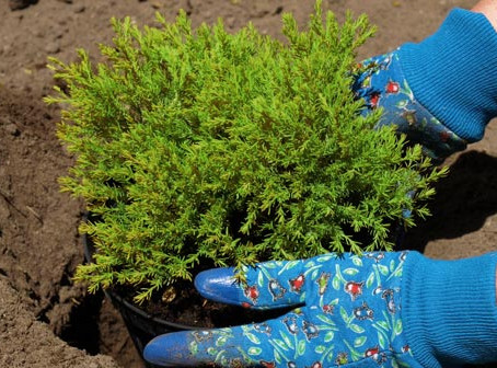 Amending Your Soil to Plant Shrubs