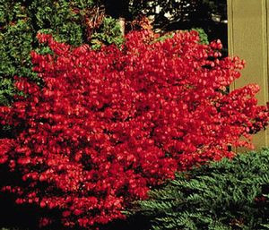 Fall Plants We Love