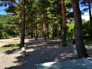 자연 숲 속 캠핑장