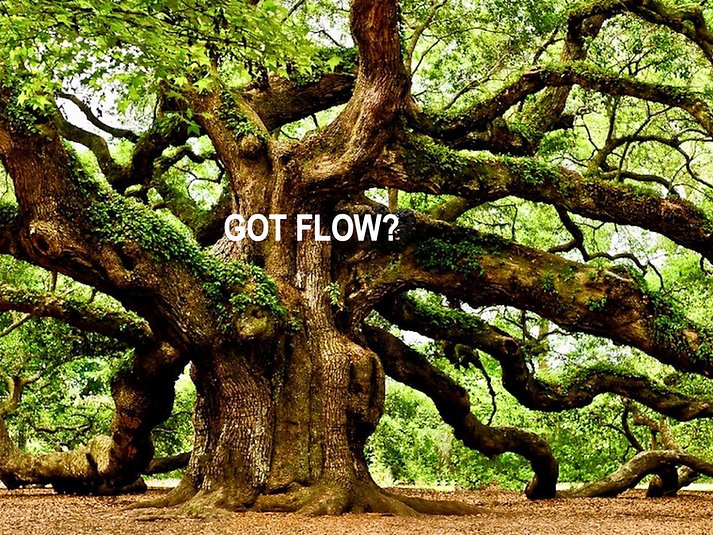 Mother Tree Got Flow?.jpg