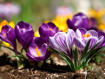 С 1 мая по 31 мая для Вас действует Весеннее предложение!