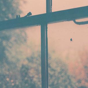 Gus White - Kitchen Window