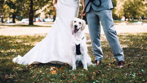 Dogs, God and Wedding Fairs