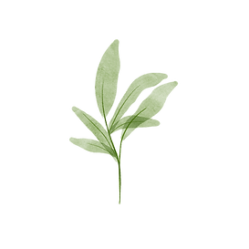 leaves-15_edited.png