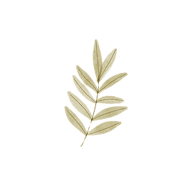 leaves-16_edited.png