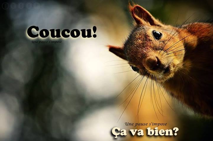 coucou