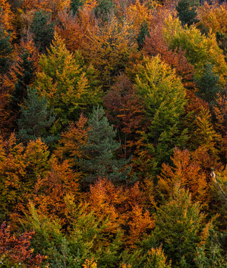 otoño_bosque_paisaje_pomar.jpg