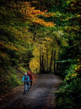 bosque_bicicletas_pomar_paisaje.jpg