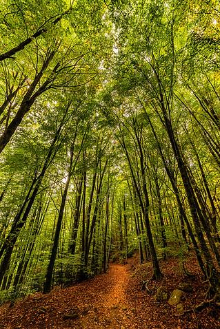 bosque_sendero_pomar_paisaje.jpg