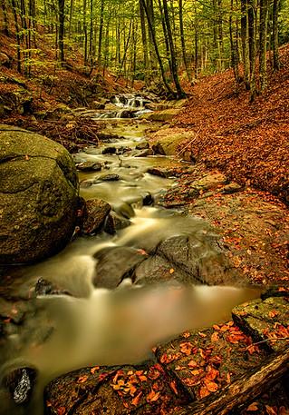 bosque_cascada_pomar_paisaje.jpg
