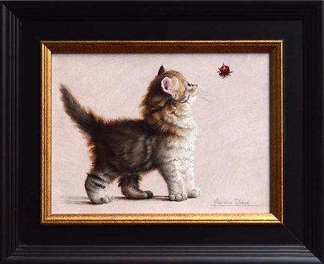 Histoire de chaton curieux