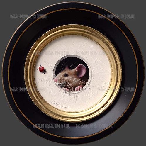 Petite souris 517