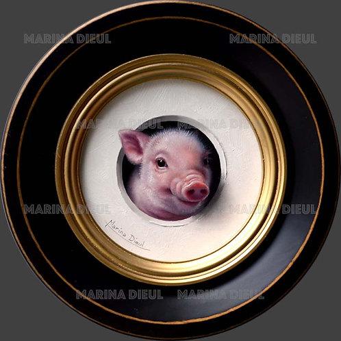 Mini cochon 5
