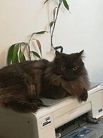 thérapie animalière avec Nélia.jpg
