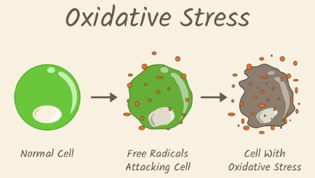 Oxidative Stress and Reactive Oxygen Species (ROS)