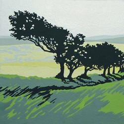 Windswept, Dartmoor