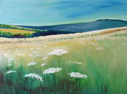 Sussex Meadow