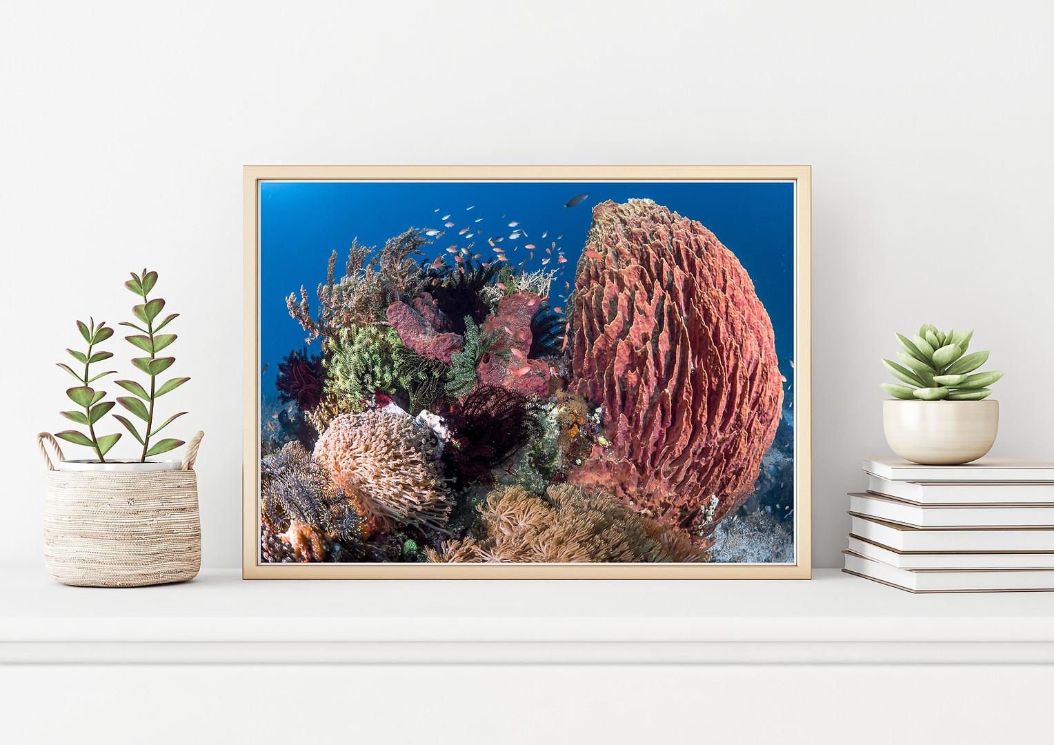 bugDreamer_frames_prints_011