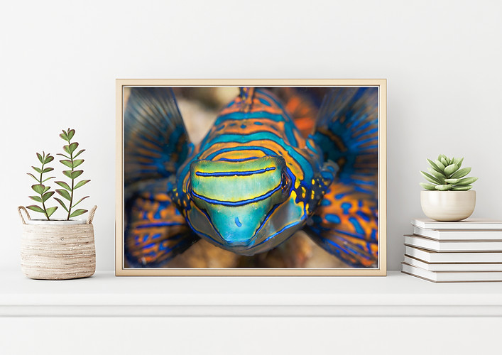 bugDreamer_frames_prints_003