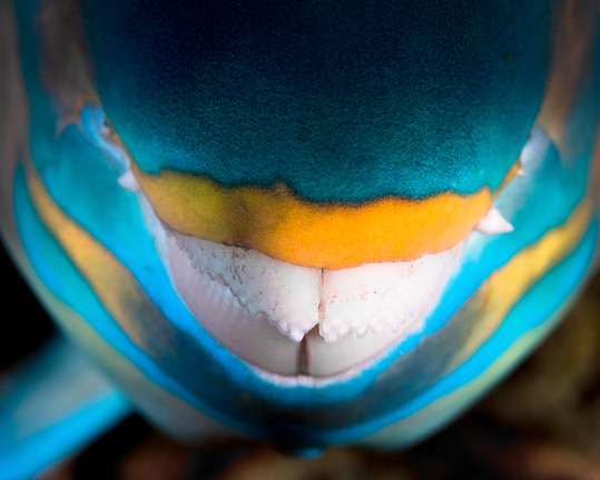 5x4_Parrotfish_001.jpg