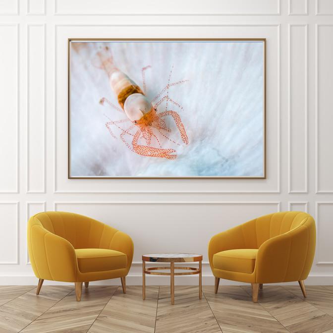bugDreamer_frames_prints_012