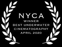 bugDreamer_marcelo_johan_ogata_NYCA_award